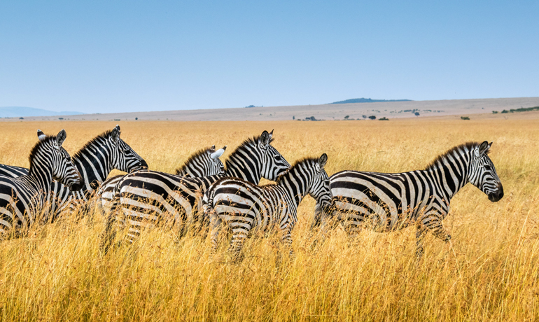 bucket list kenya safari
