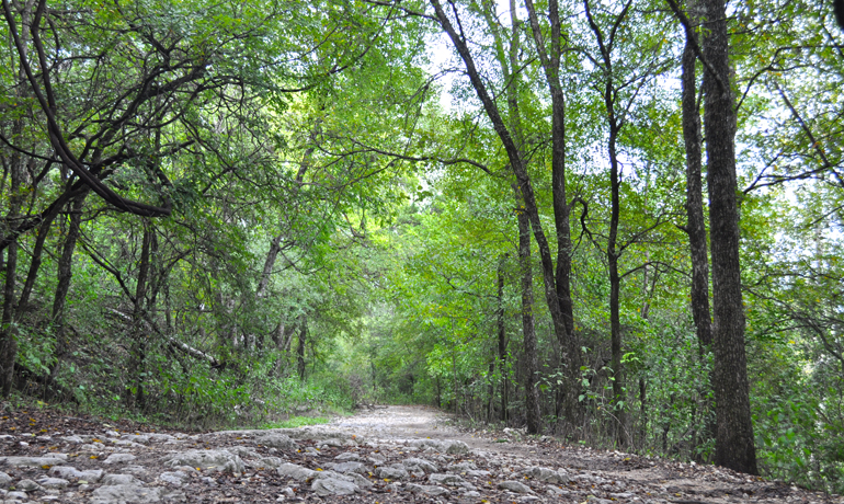 barton creek greenbelt hiking austin