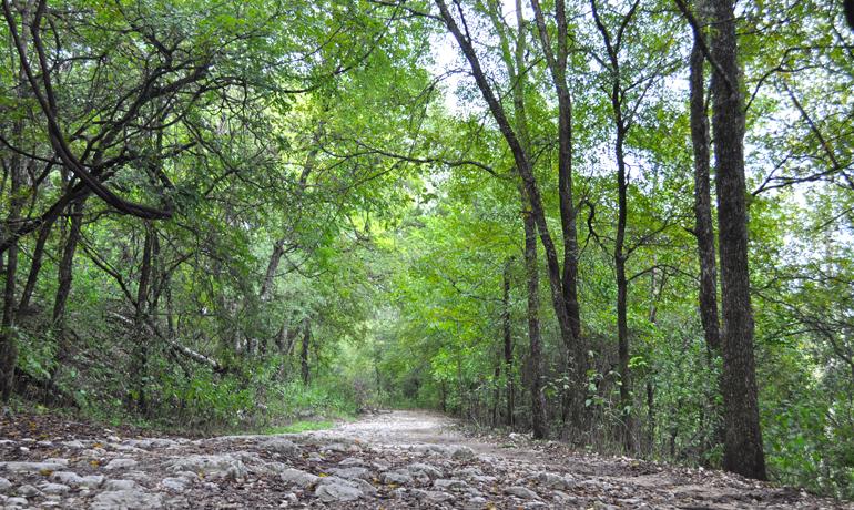 barton creek greenbelt hiking austin