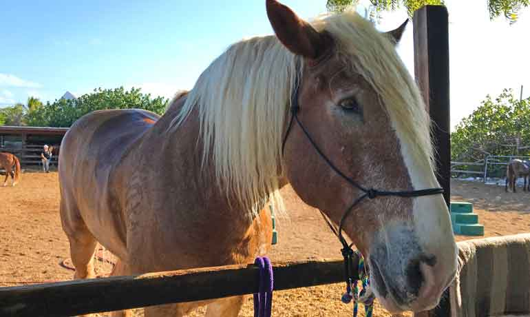 provo ponies horses - turtle large horse