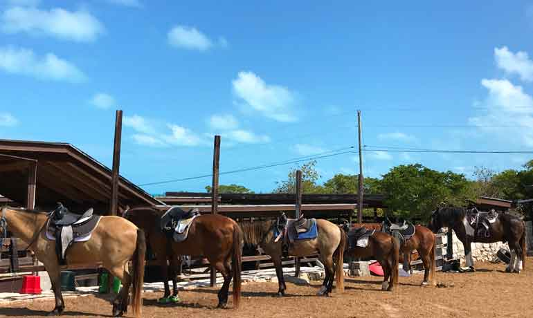 provo ponies horses at stable lined up waiting