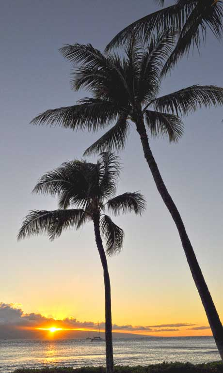 Maui sunset with two palm trees and sun setting in the background