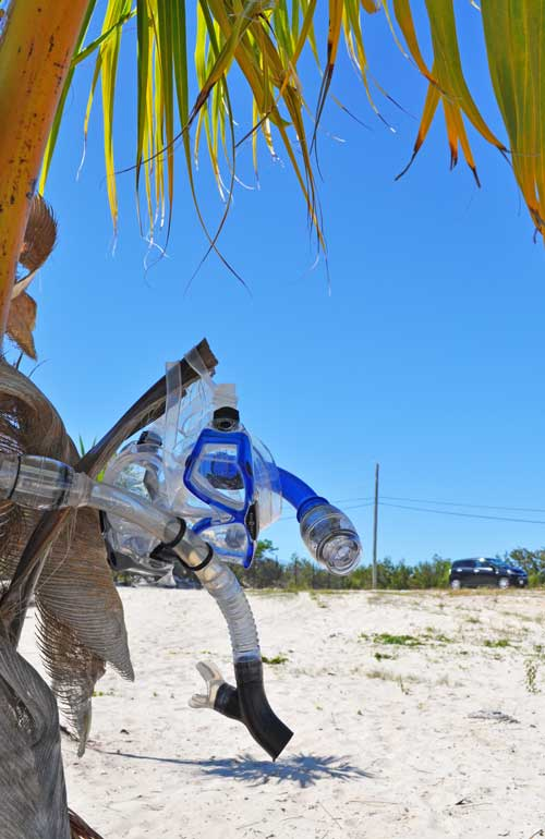 snorkel gear drying off a palm tree in Turks and Caicos