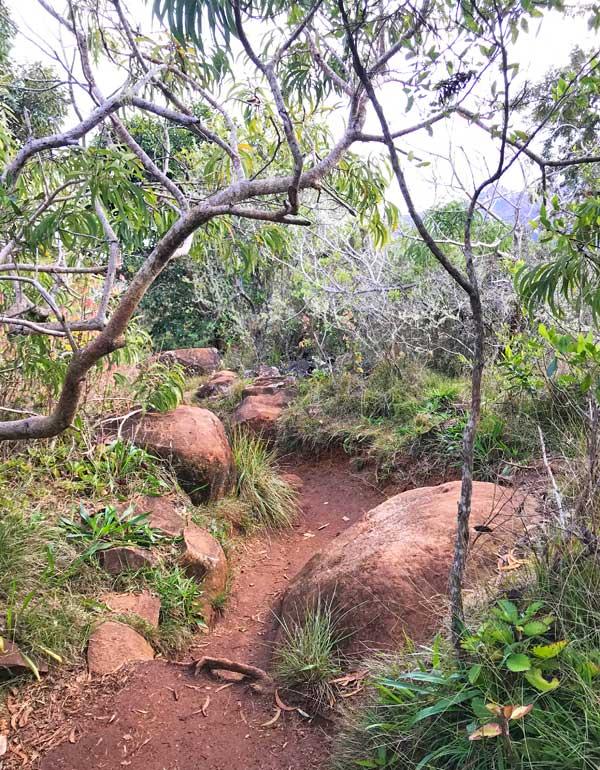 Waimea Canyon Trail in Kauai