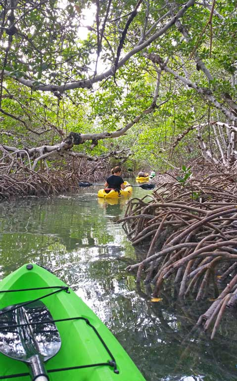 Kayaking the mangroves in Florida on a Miami to Key West road trip