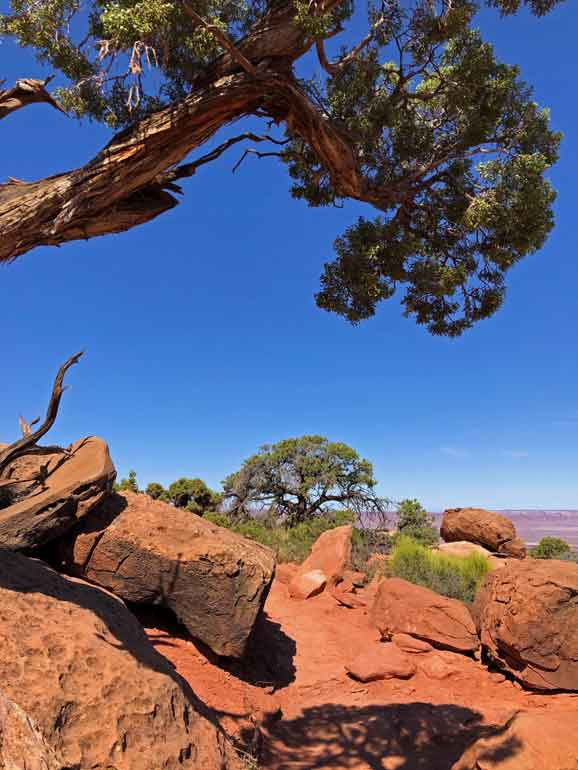 hiking trails moab