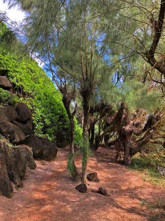 inner Mahaulepu Trail