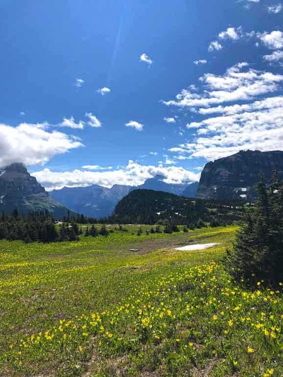 wildflowers hidden trail