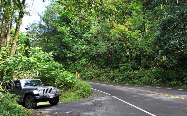 Maui Hawaii lush forest