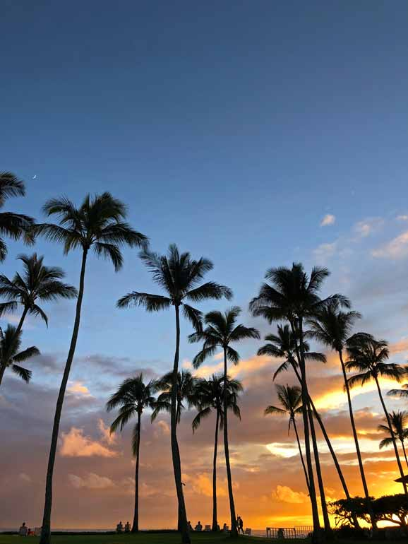 warm places to visit in winter in isa-palm tree beaches