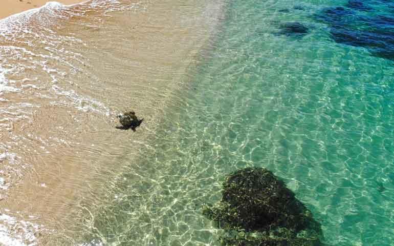 snorkeling kauai hideaway beach turtle