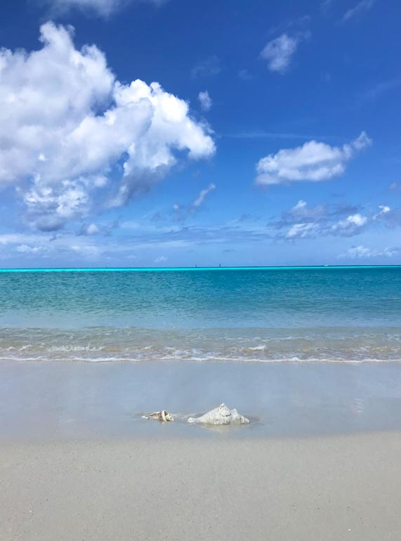 conch shell turks and caicos