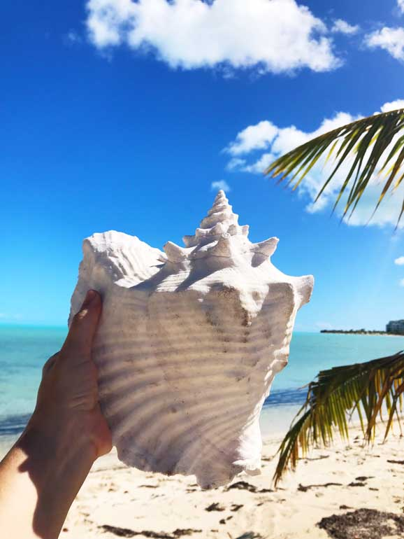 things to do in turks and caicos hunt for conch