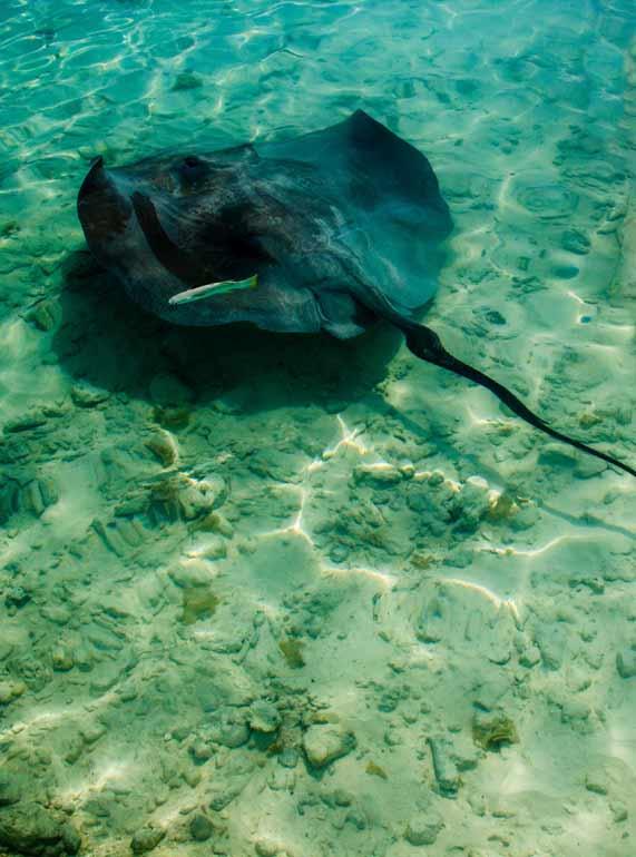 snorkeling with stingray turks