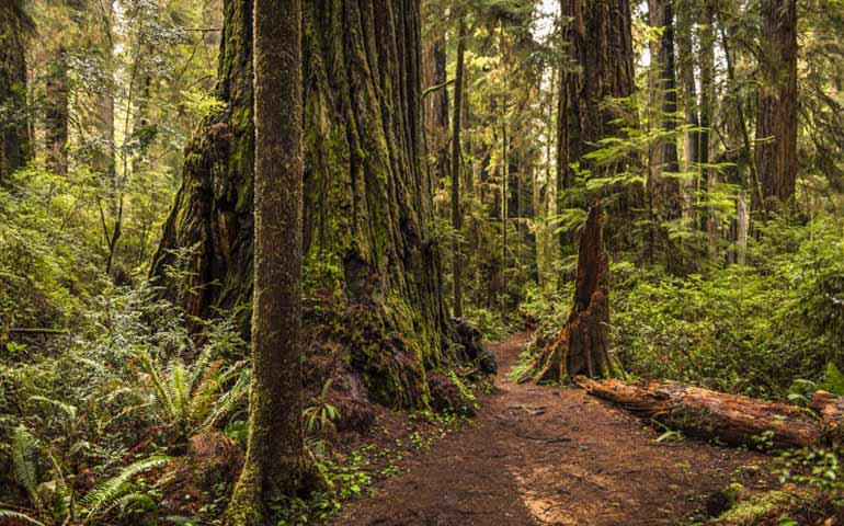 Redwoods NP in California - best national parks to visit in summer