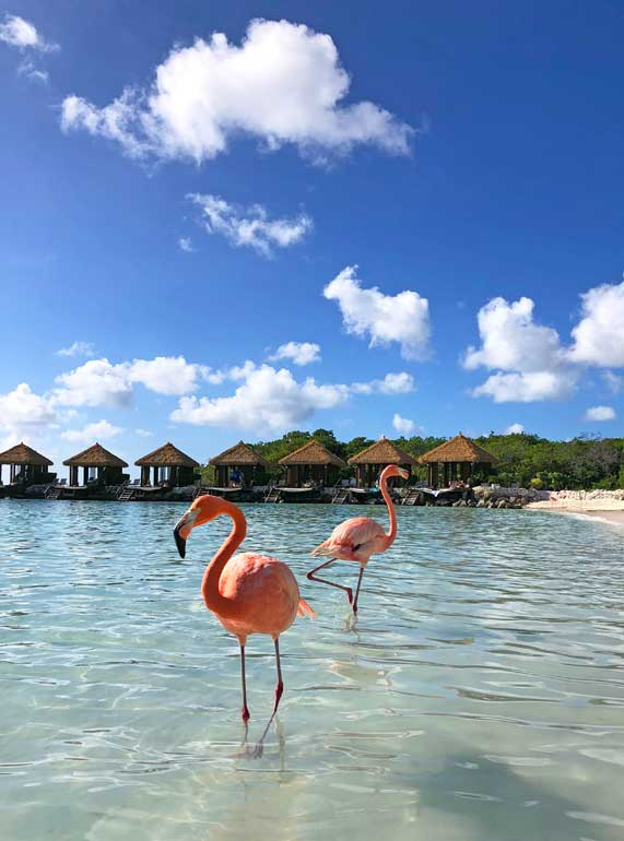 Renaissance island aruba day pass to see the flamingos