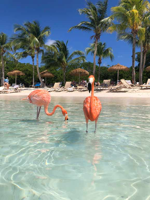 how to see flamingos in aruba