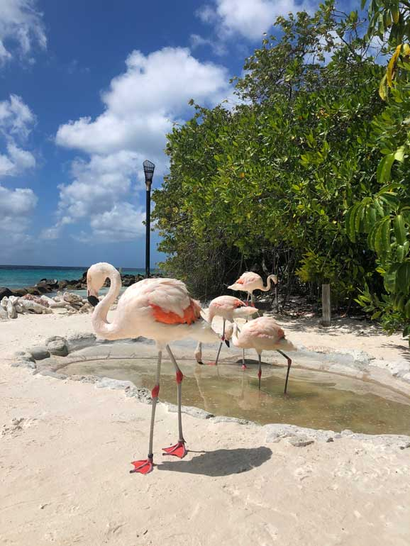 white flamingos standing on the sand