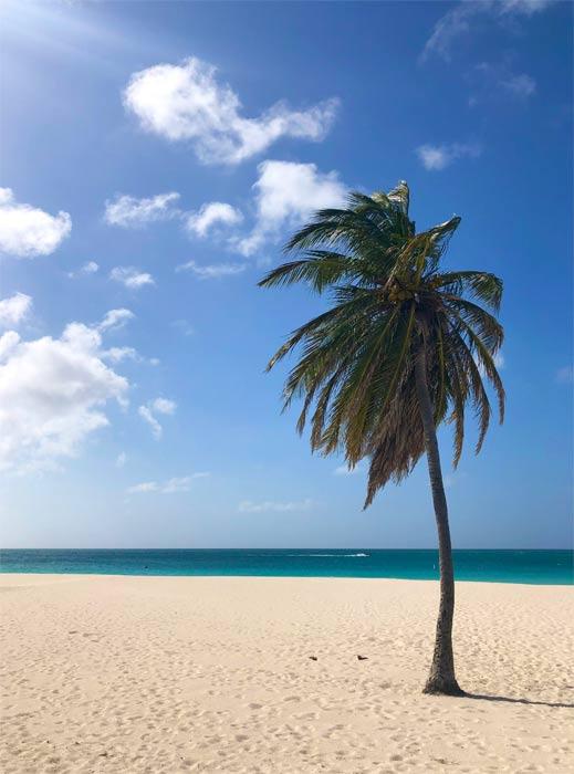 eagle beach, aruba with palm tree
