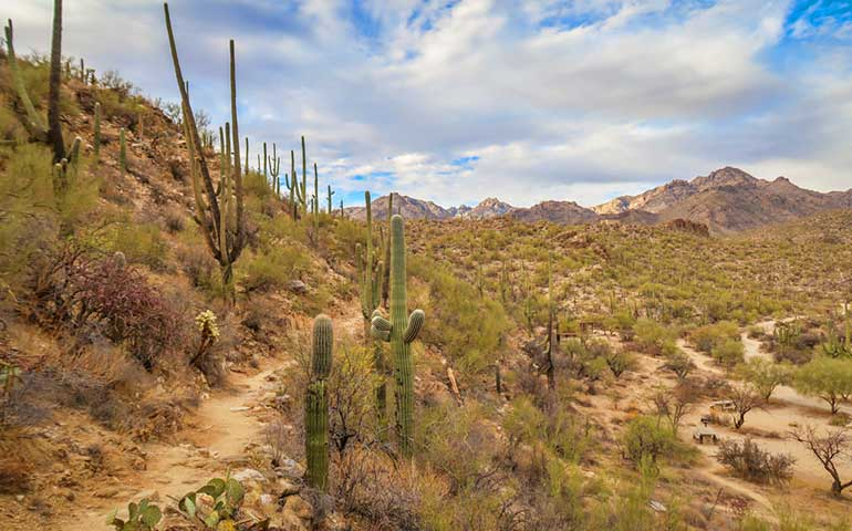easiest hikes in the usa Sabino canyon desert views
