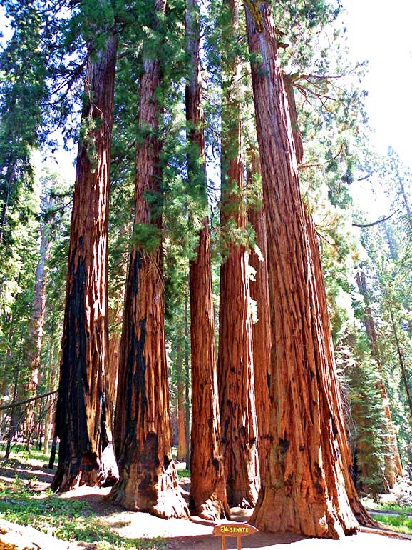 sequoia national park hikes