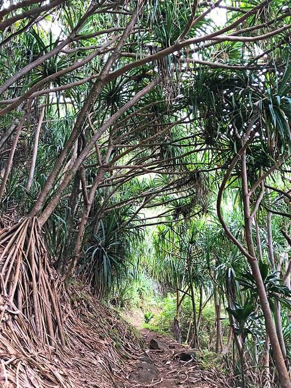 best oahu hiking trails
