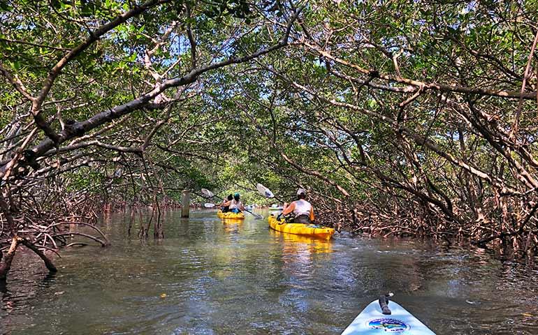 kayaking Anna Maria Island florida