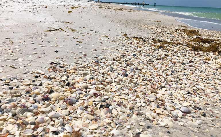 hunting seashells