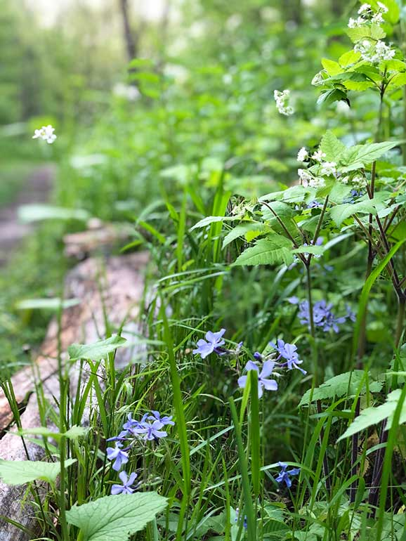 wildflowers along a trail