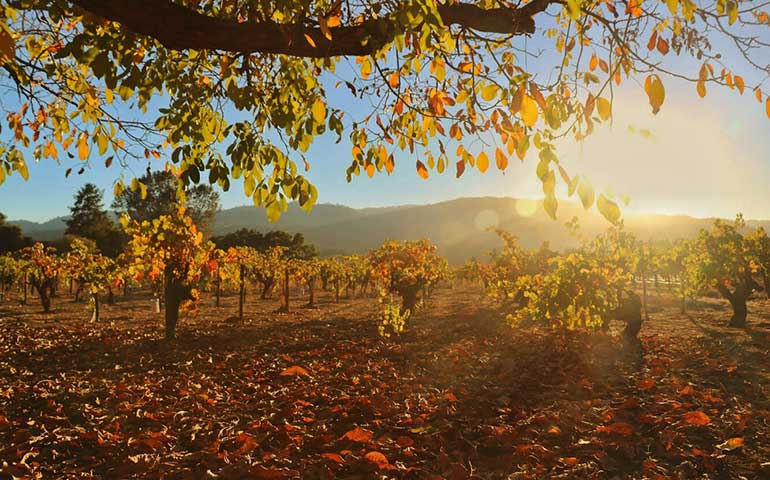 best places to visit in October in the US - Napa Valley in the fall
