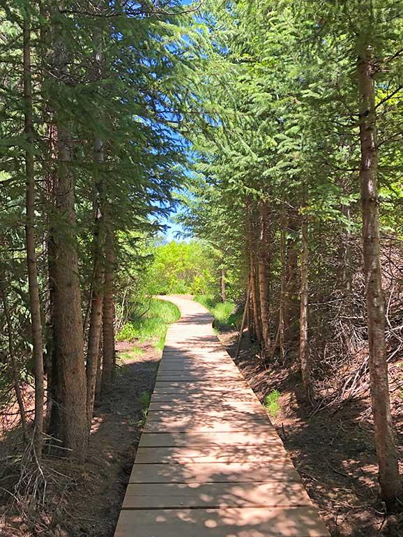 hike through woods