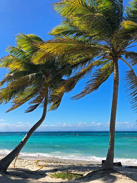 picturesque palm trees against the Caribbean backdrop