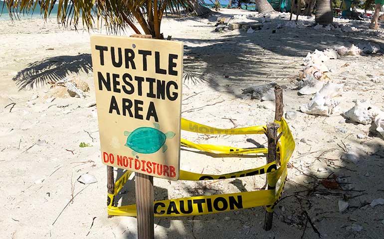 turtle nesting area sign