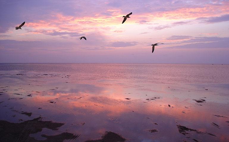 south padre island pink sunset